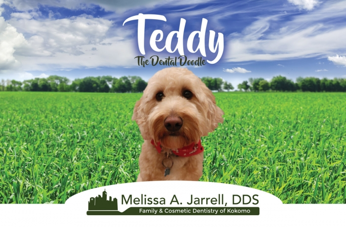 Teddy (The Dental Doodle) | Family And Cosmetic Denstistry